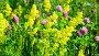 Various herbs and flowers on meadow close-up, Russia, видеоролик № 26844692, снято 29 июня 2017 г. (c) Володина Ольга / Фотобанк Лори
