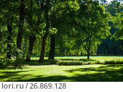 Купить «Summer landscape - colorful summer park with green summer trees in sunny weather», фото № 26869128, снято 15 августа 2017 г. (c) Зезелина Марина / Фотобанк Лори