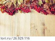 Купить «Autumn background with seasonal autumn nature berries of Viburnum opulus or guelder rose on the wooden background», фото № 26929116, снято 6 сентября 2017 г. (c) Зезелина Марина / Фотобанк Лори