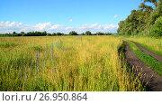 Купить «Wild grass in a vacant lot in wind», видеоролик № 26950864, снято 2 июля 2017 г. (c) Володина Ольга / Фотобанк Лори