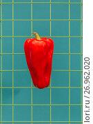 Купить «Сладкий красный стручковый перец на металлической сетке», фото № 26962020, снято 2 сентября 2017 г. (c) V.Ivantsov / Фотобанк Лори