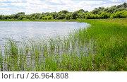 Купить «Fragment of pond overgrown with reeds», видеоролик № 26964808, снято 22 июня 2017 г. (c) Володина Ольга / Фотобанк Лори