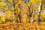 Sunny autumn in the park, фото № 26981872, снято 4 октября 2016 г. (c) Sergey Borisov / Фотобанк Лори
