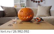 Купить «jack-o-lantern and halloween decorations at home», видеоролик № 26982092, снято 20 сентября 2017 г. (c) Syda Productions / Фотобанк Лори