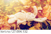 Купить «toy rabbit in fallen autumn leaves», фото № 27004132, снято 12 октября 2016 г. (c) Syda Productions / Фотобанк Лори