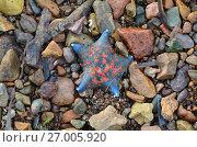 Купить «Морская звезда», фото № 27005920, снято 17 сентября 2017 г. (c) Овчинникова Ирина / Фотобанк Лори