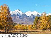 Красивый осенний пейзаж с пожелтевшими деревьями на фоне заснеженных гор в солнечный сентябрьский день. Стоковое фото, фотограф Виктория Катьянова / Фотобанк Лори