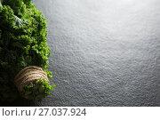 High angle view of fresh kale bundle. Стоковое фото, агентство Wavebreak Media / Фотобанк Лори