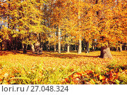 Купить «Autumn picturesque landscape. Desiduous autumn tree with fallen autumn leaves lit by sunshine», фото № 27048324, снято 9 октября 2016 г. (c) Зезелина Марина / Фотобанк Лори