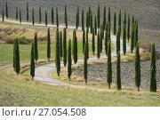 Купить «Извилистая сельская дорога с кипарисами вдоль вспаханного поля. Тоскана, Италия», фото № 27054508, снято 23 сентября 2017 г. (c) Виктор Карасев / Фотобанк Лори