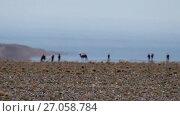 Купить «Camels on the Mirage in mongolian arid stone desert. Optical illusion of water lake oasis on horizon. Western Mongolia», видеоролик № 27058784, снято 22 сентября 2017 г. (c) Serg Zastavkin / Фотобанк Лори
