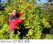 Купить «Самара. Женщина рядом с кустом калины», фото № 27061456, снято 8 октября 2017 г. (c) Светлана Кириллова / Фотобанк Лори