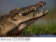 Купить «Nile crocodile (Crocodylus niloticus), Zimanga Game Reserve, KwaZulu-Natal, South Africa.», фото № 27073660, снято 12 июля 2020 г. (c) Nature Picture Library / Фотобанк Лори