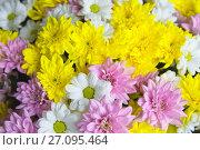 Купить «Букет из хризантем», фото № 27095464, снято 15 октября 2017 г. (c) Зобков Георгий / Фотобанк Лори