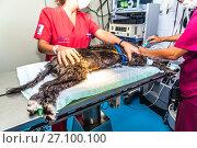 Купить «Dog at the vet's operating theater», фото № 27100100, снято 21 сентября 2017 г. (c) age Fotostock / Фотобанк Лори
