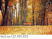 Купить «Autumn landscape. Bench under the orange autumn trees», фото № 27101572, снято 10 октября 2017 г. (c) Зезелина Марина / Фотобанк Лори