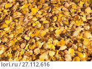Купить «Желтые опавшие осенние листья», фото № 27112616, снято 19 октября 2017 г. (c) Дудакова / Фотобанк Лори