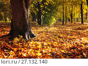 Купить «Autumn forest landscape. Fallen autumn leaves covering the ground and forest autumn trees», фото № 27132140, снято 6 октября 2017 г. (c) Зезелина Марина / Фотобанк Лори