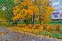 Желтые осенние деревья, фото № 27132308, снято 15 октября 2017 г. (c) Владимир Федечкин / Фотобанк Лори