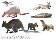 Купить «australian animals isolated», фото № 27133036, снято 23 января 2019 г. (c) Яков Филимонов / Фотобанк Лори
