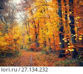 Купить «Pathway in autumn forest», фото № 27134232, снято 4 апреля 2020 г. (c) Sergey Borisov / Фотобанк Лори