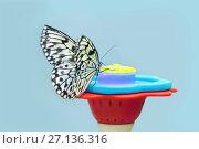 Купить «Идея Левконоя, или Идея белая (Бумажный змей, Рисовая бумага, Idea leuconoe)», фото № 27136316, снято 3 июня 2017 г. (c) Татьяна Белова / Фотобанк Лори