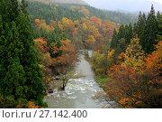 Купить «Anmon Falls and autumnal trees, Akashikeiryu Anmonnotaki Nature Park, Shirakami Sanchi UNESCO World Heritage Site, Naka Tsugaru County, Aomori Prefecture, Japan. November 2012.», фото № 27142400, снято 18 июня 2019 г. (c) Nature Picture Library / Фотобанк Лори