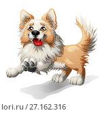 Купить «Бегущий щенок Бордер Колли», иллюстрация № 27162316 (c) Анастасия Некрасова / Фотобанк Лори