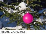 Купить «Розовый елочный шар висит на заснеженной ветке ели», эксклюзивное фото № 27167952, снято 11 января 2017 г. (c) Елена Коромыслова / Фотобанк Лори