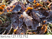 Купить «Первые осенние заморозки», фото № 27172712, снято 2 ноября 2017 г. (c) Юлия Бабкина / Фотобанк Лори
