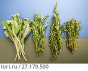 Купить «Fresh Rosemary, thyme, tarragon and sage on a light blue-green textured textured background.», фото № 27179500, снято 17 сентября 2019 г. (c) Olesya Tseytlin / Фотобанк Лори