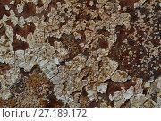 Background texture of Rusted steel. Стоковое фото, фотограф Анфимов Леонид / Фотобанк Лори