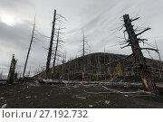 Купить «Мертвый лес на полуострове Камчатка», фото № 27192732, снято 17 сентября 2013 г. (c) А. А. Пирагис / Фотобанк Лори