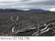 Купить «Мертвый лес на полуострове Камчатка», фото № 27192736, снято 17 сентября 2013 г. (c) А. А. Пирагис / Фотобанк Лори