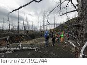 Купить «Туристы гуляют в Мертвом лесу на Камчатке», фото № 27192744, снято 23 марта 2019 г. (c) А. А. Пирагис / Фотобанк Лори