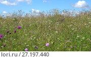 Купить «Летнее поле с травой солнечным днем», видеоролик № 27197440, снято 3 августа 2017 г. (c) Виктор Карасев / Фотобанк Лори