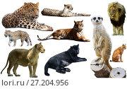Купить «Set of African predators isolated over white», фото № 27204956, снято 15 октября 2018 г. (c) Яков Филимонов / Фотобанк Лори