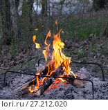 A picnic with a campfire in the woods. Стоковое фото, фотограф Дмитрий Пронченко / Фотобанк Лори