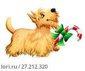 Купить «Бежевая собачка породы Скотч Терьер держит лапой новогодний леденец с зеленым бантиком. Иллюстрация в мультипликационном стиле, изолированно на белом фоне.», иллюстрация № 27212320 (c) Анастасия Некрасова / Фотобанк Лори