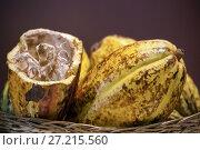 Купить «Какао плоды», фото № 27215560, снято 5 марта 2016 г. (c) Татьяна Белова / Фотобанк Лори