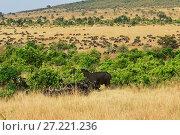 Купить «Masai Mara, Kenya, Africa», фото № 27221236, снято 21 августа 2010 г. (c) Знаменский Олег / Фотобанк Лори