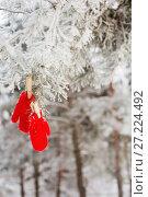 Купить «red mittens in winter forest», фото № 27224492, снято 24 января 2016 г. (c) Майя Крученкова / Фотобанк Лори