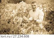 Купить «Portrait of happy farmer near grapes in vineyard», фото № 27234608, снято 22 сентября 2016 г. (c) Яков Филимонов / Фотобанк Лори