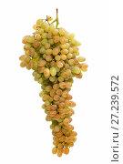 Купить «Спелая большая гроздь винограда кишмиш на белом фоне», фото № 27239572, снято 25 ноября 2017 г. (c) V.Ivantsov / Фотобанк Лори