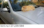 Купить «Cat on the car's hood», видеоролик № 27239584, снято 19 января 2005 г. (c) Илья Шаматура / Фотобанк Лори