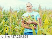 Купить «Man in cornfield with corn cobs», фото № 27239868, снято 12 сентября 2012 г. (c) Яков Филимонов / Фотобанк Лори