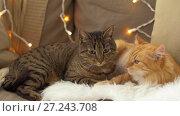 Купить «two cats lying on sofa with sheepskin at home», видеоролик № 27243708, снято 23 ноября 2017 г. (c) Syda Productions / Фотобанк Лори