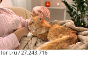 Купить «woman stroking red tabby cat in bed at home», видеоролик № 27243716, снято 24 ноября 2017 г. (c) Syda Productions / Фотобанк Лори