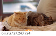 Купить «two cats lying on blanket at home window sill», видеоролик № 27243724, снято 24 ноября 2017 г. (c) Syda Productions / Фотобанк Лори