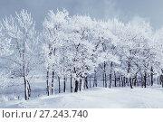Купить «Winter landscape. Winter wonderland with snowy winter trees in winter forest», фото № 27243740, снято 23 марта 2019 г. (c) Зезелина Марина / Фотобанк Лори